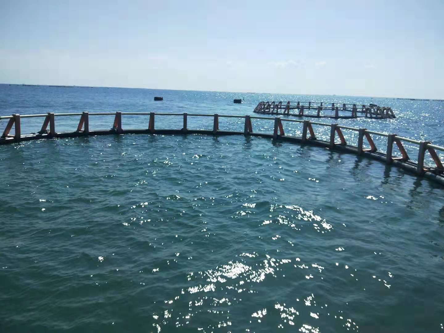 Marine Aquaculture: sea cages Project East of Port Said